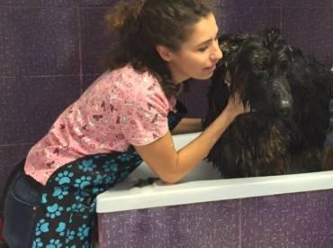 Beneficiile pe care baia le are pentru cainele vostru